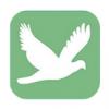 飞鸟直播免费版